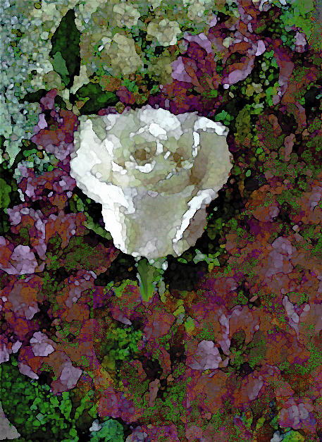 White Rose 211 by Corinne Carroll