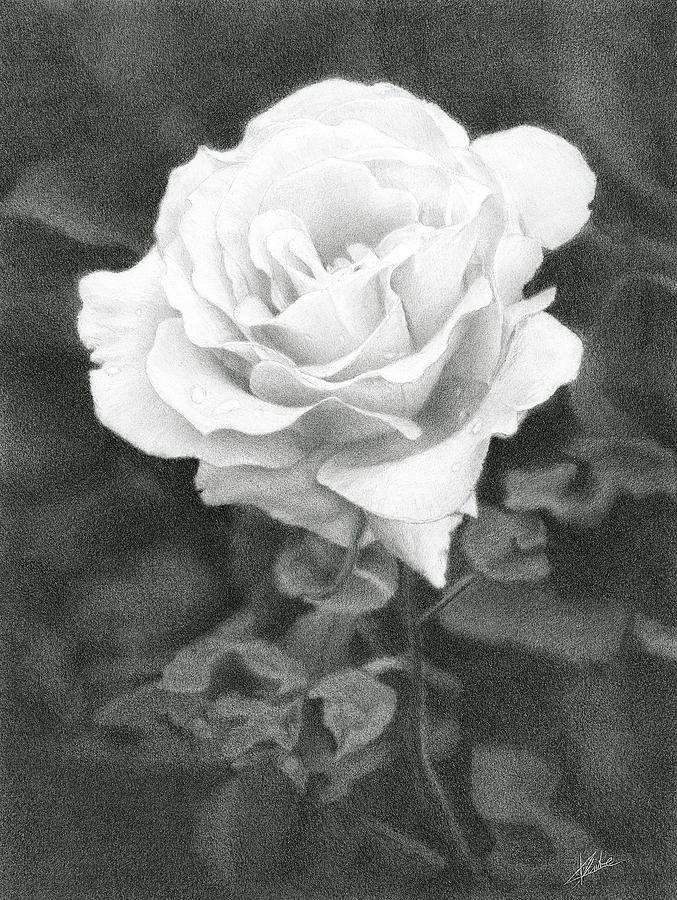 Rose Drawing - White Rose by Christian Klute