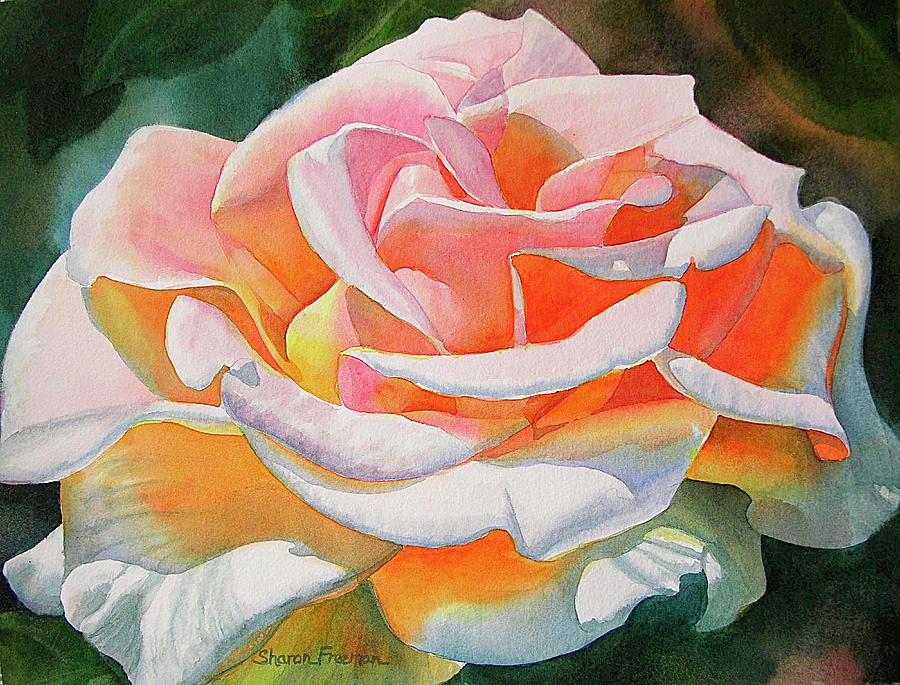 Rose Painting - White Rose with Orange Glow by Sharon Freeman
