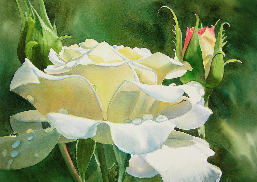 Rose Painting - White Rose with Raindrops by Sharon Freeman