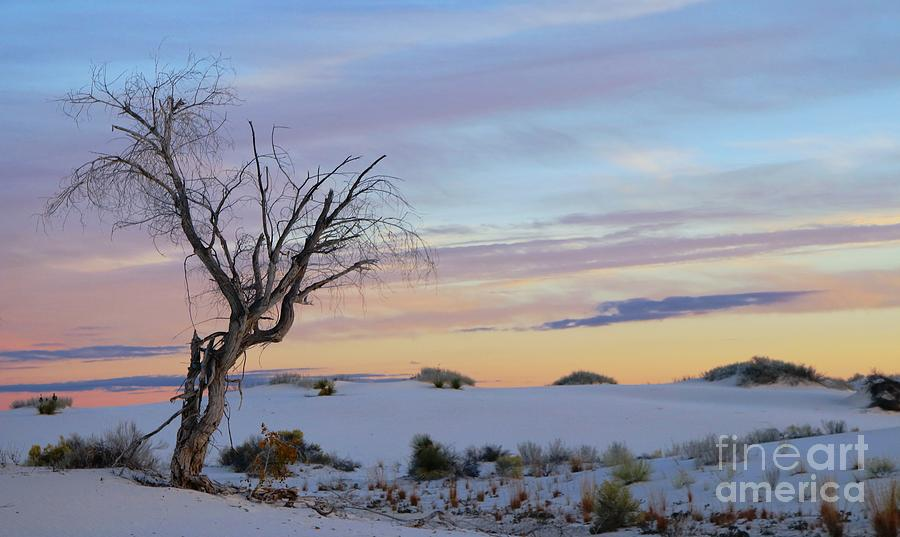 White Sands, New Mexico by Marcia Lee Jones