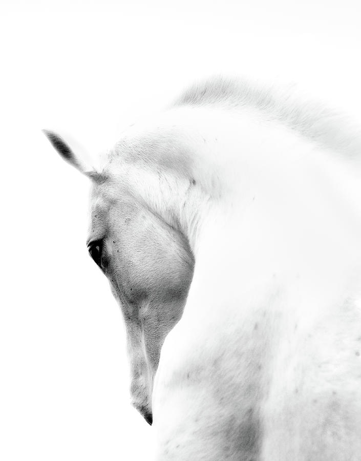 White Stallion Andalusian Horse Neck Photograph by 66north