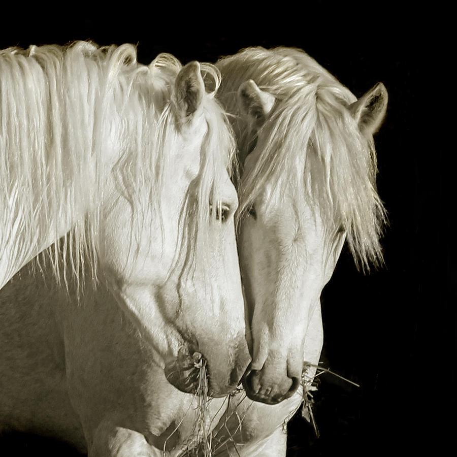 White Stallions by Karen Lynch