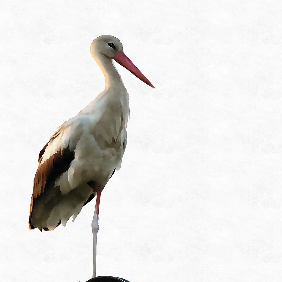 White Stork Ciconia ciconia by Taiche Acrylic Art