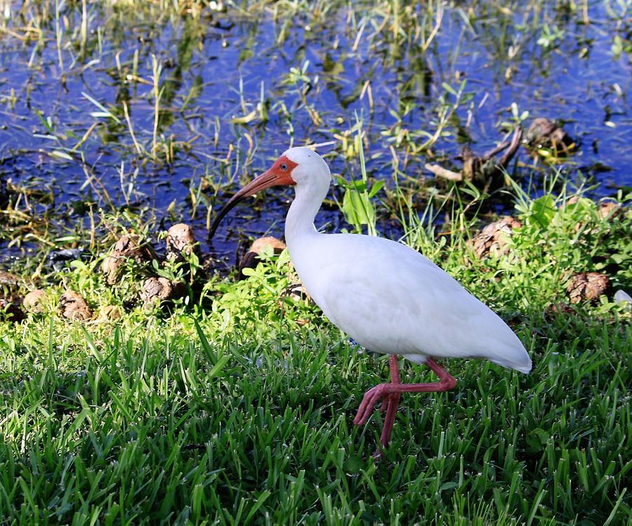 White Tropical Bird by Philip Bracco