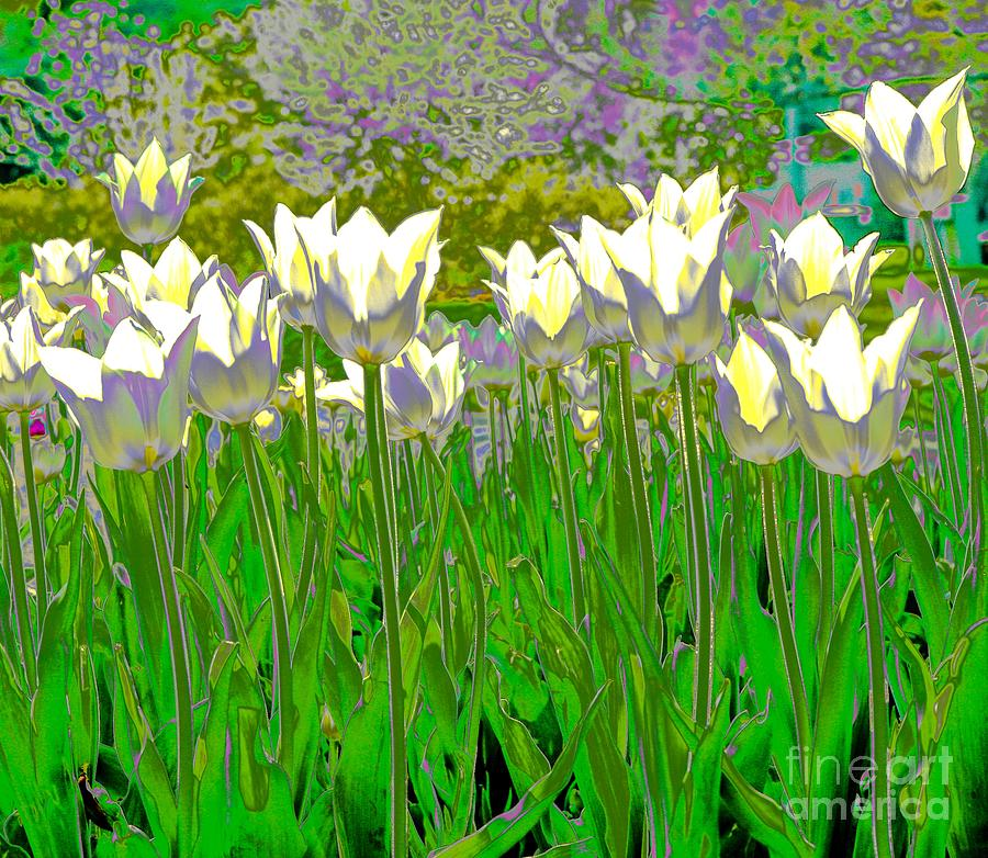 Tulips Digital Art - White Tulips by Susan Rydberg