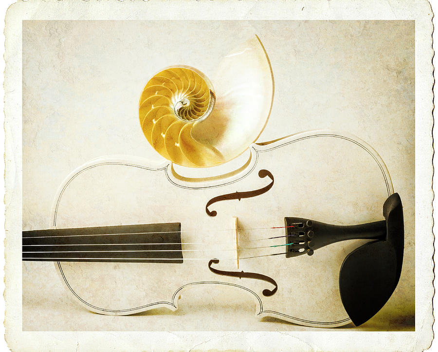 Earthy Photograph - White Violin And Nautilus Textured by Garry Gay