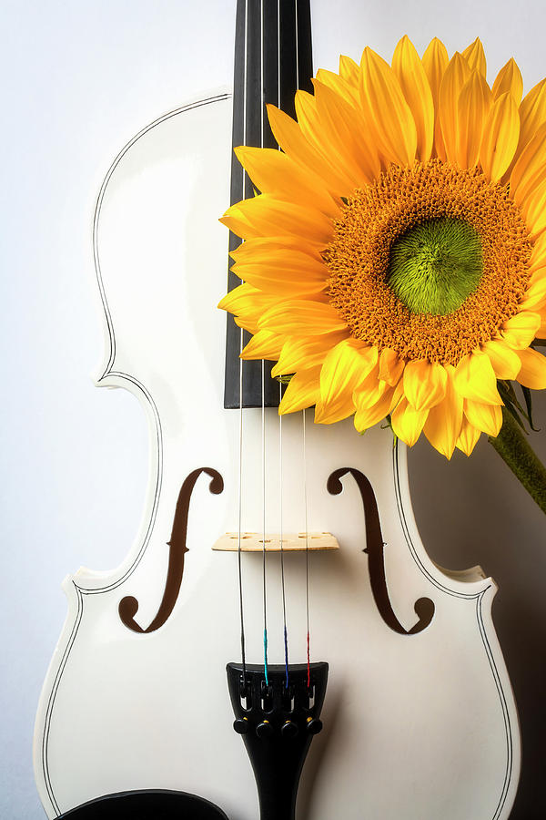 Violin Photograph - White Violin And Sunflower by Garry Gay