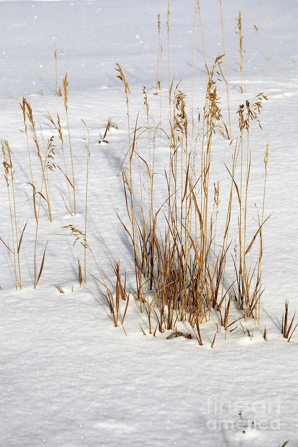 Whitehorse winter landscape by Louise Heusinkveld