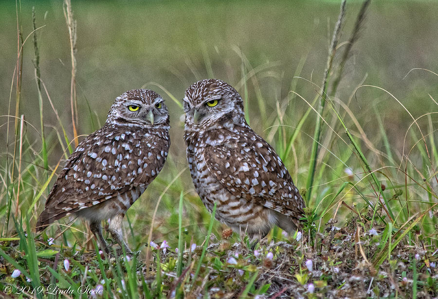Who's There? by Linda Steele