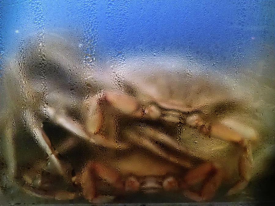 Who's Crabby by George Harth