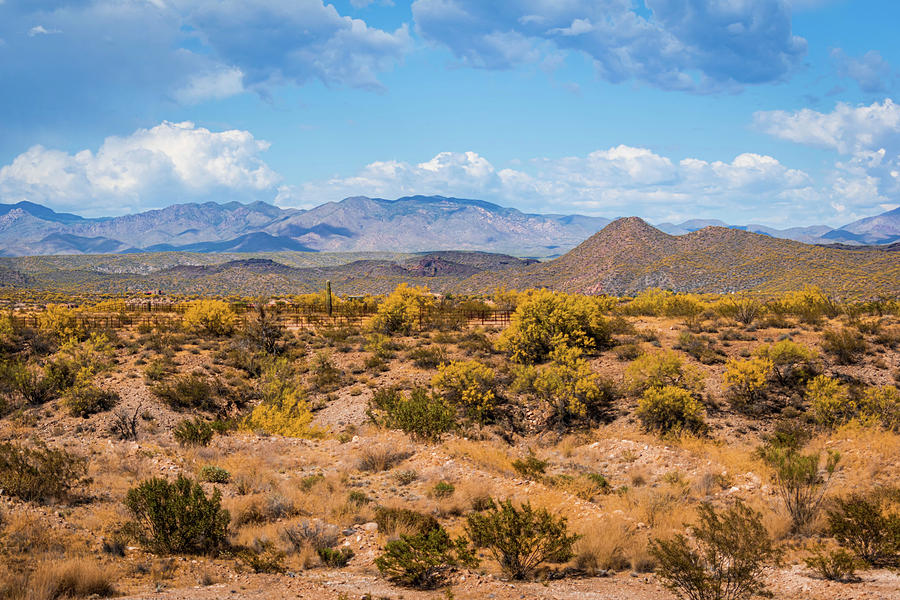 Wickenburg Mountains by Juliana Swenson