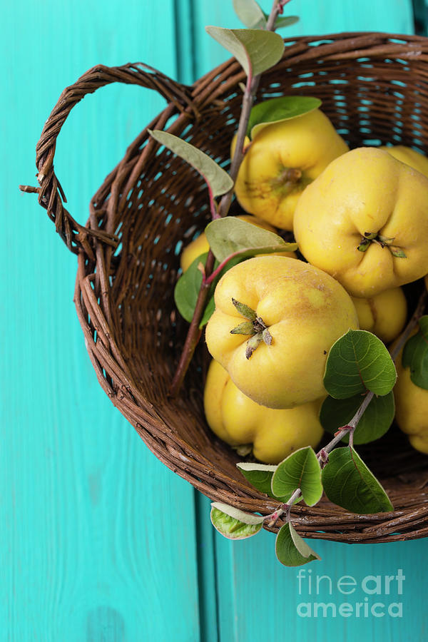 Wickerbasket Of Quinces Photograph by Westend61