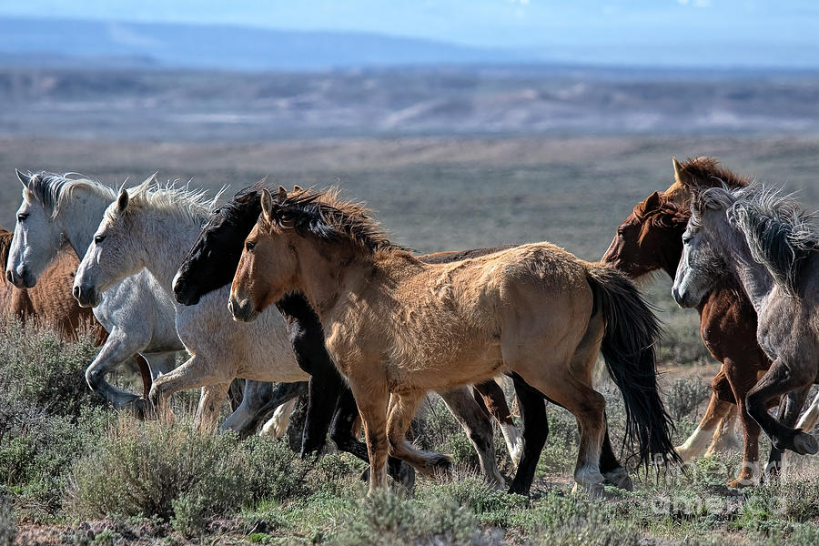 Wild and Wooley   by Jim Garrison