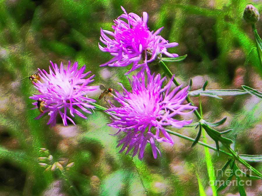 Wild Bergamot Bee Balm by Rockin Docks