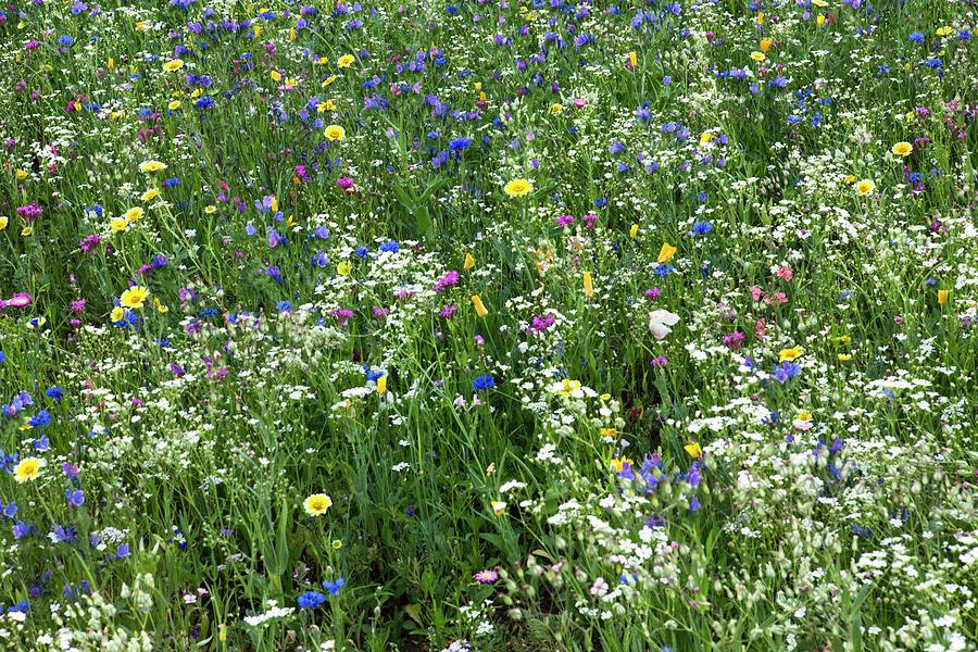 Wildflower Photograph - Wild Blumen by Iris Richardson