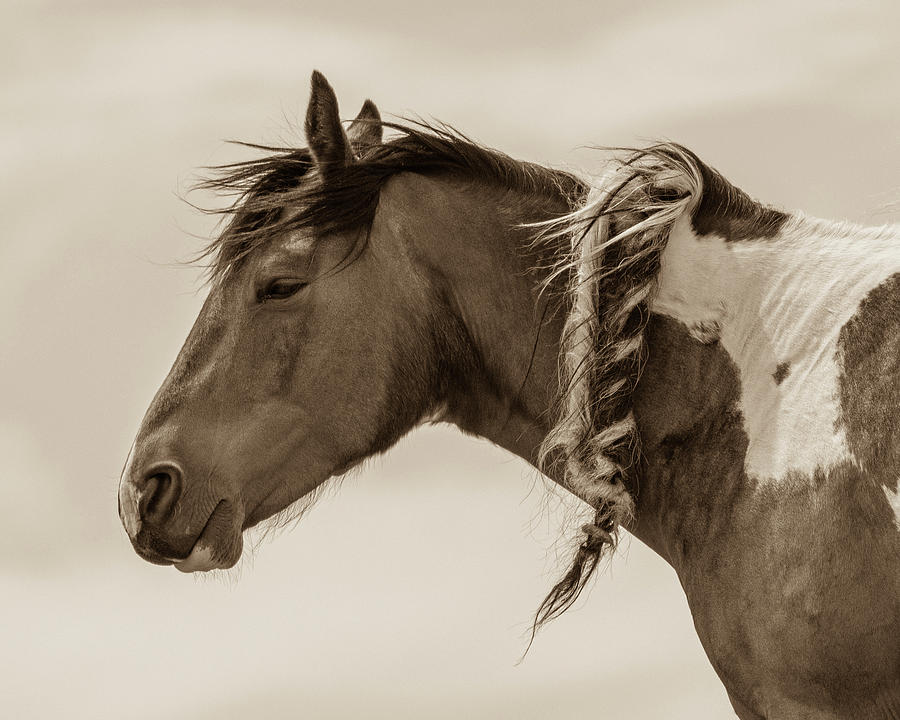 Wild Braids 2 by Mary Hone
