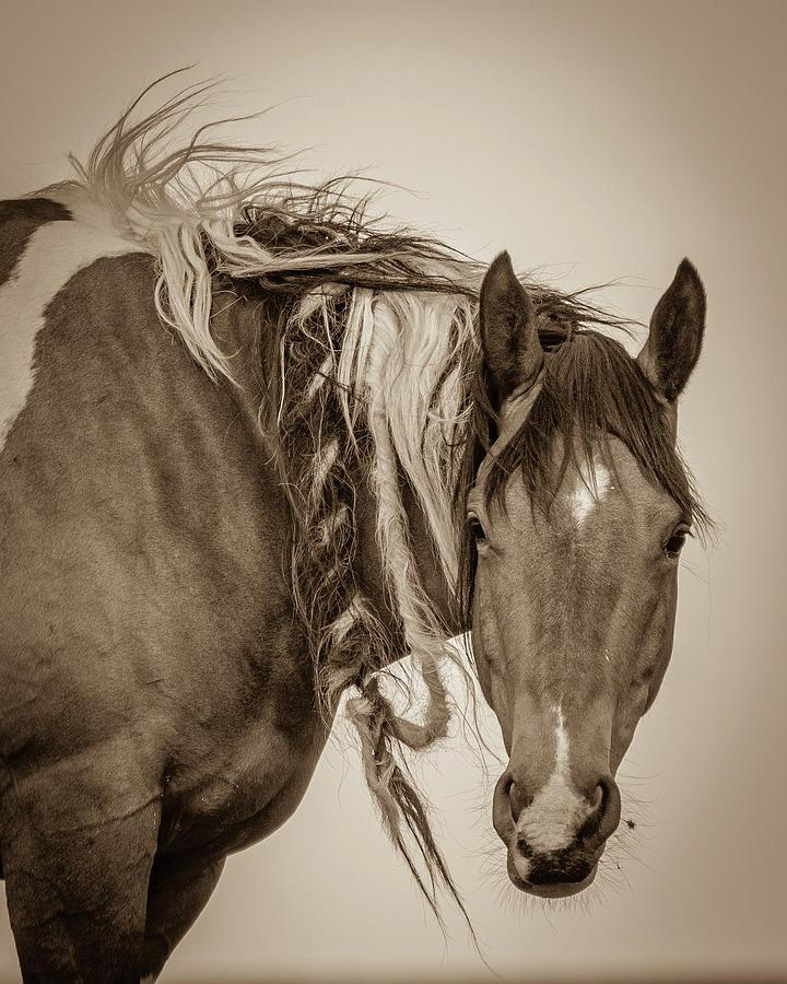 Wild Braids by Mary Hone