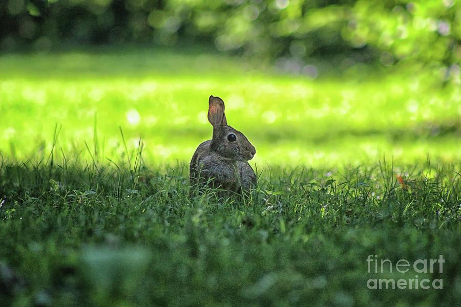 Wild Bunny Rabbit by Karen Adams