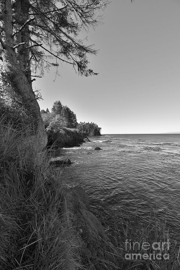 Wild Coast by Jeni Gray