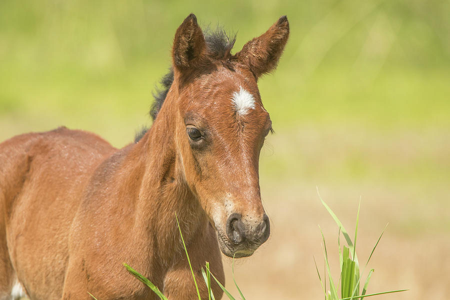 Wild Colt Portrait by Marc Crumpler