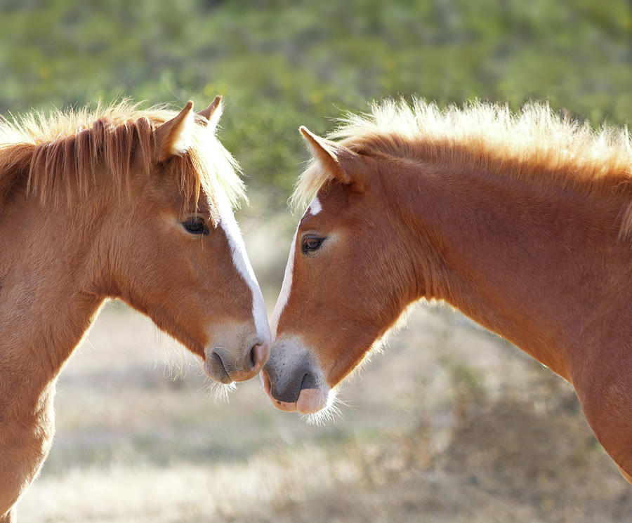 Wild Colts Morning Greeting by Barbara Sophia Travels