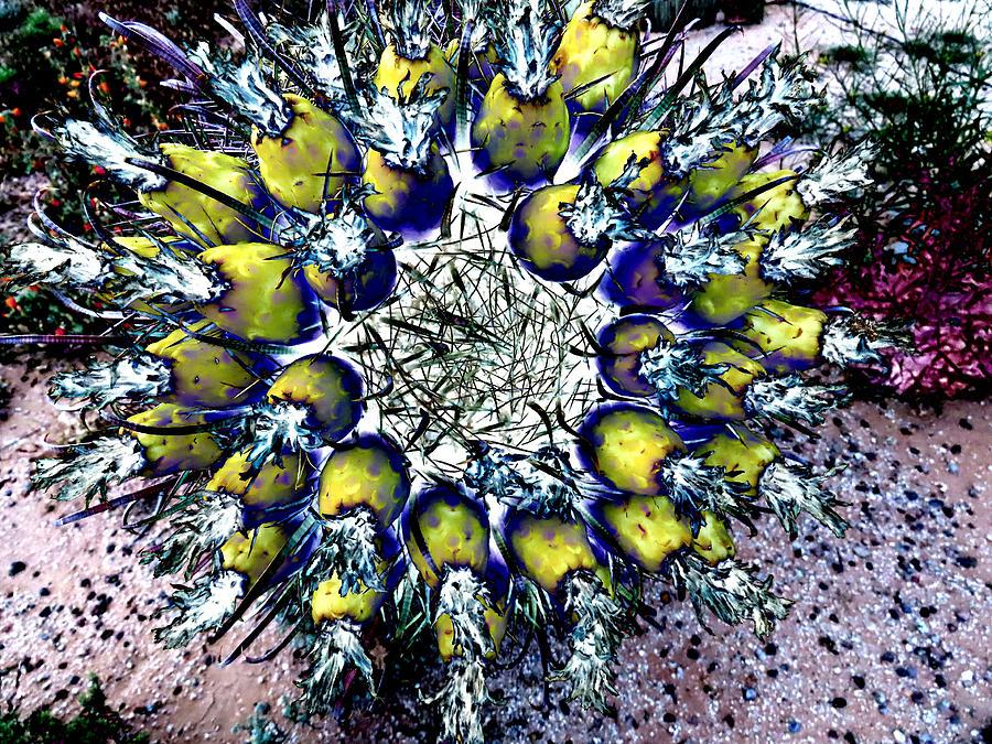 Wild Desert Banquet by Judy Kennedy