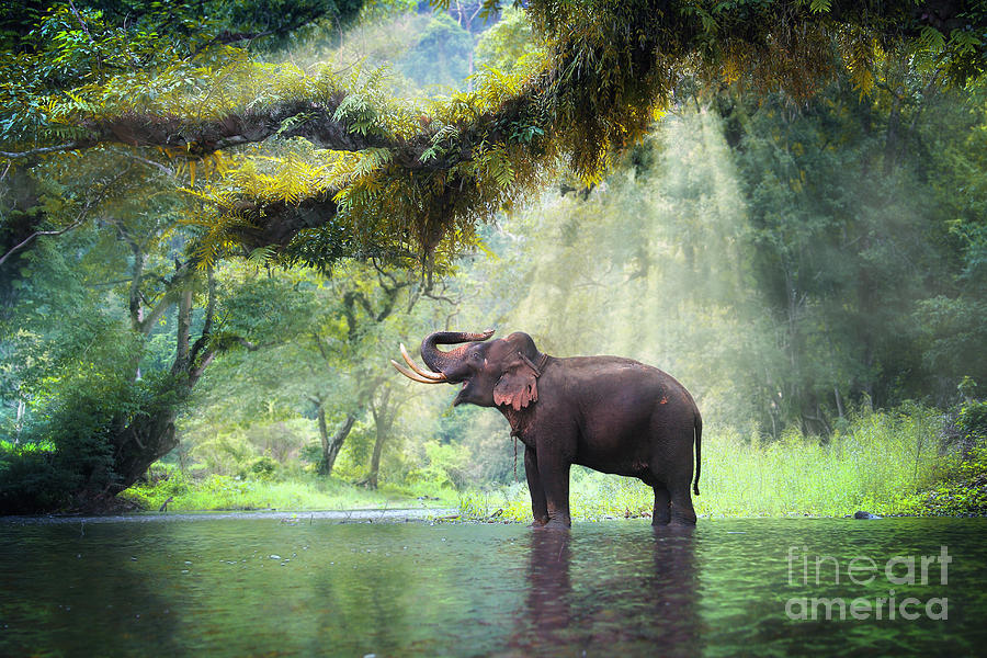 Beam Photograph - Wild Elephant In The Beautiful Forest by Bundit Jonwises