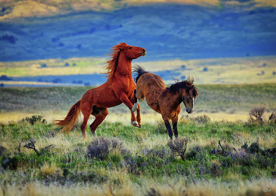 Wild Equine Play Time by Greg Norrell