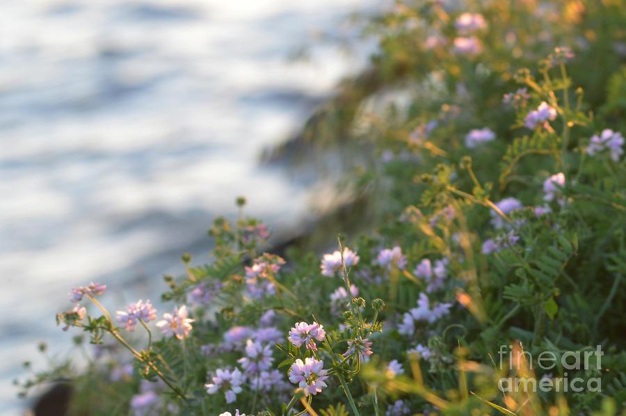 Wild Flowers Near The Water by Sheila Lee