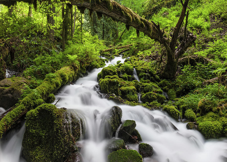 Wild Forest Waterfall Idyllic Green Photograph by Fotovoyager