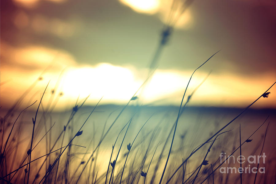 Serenity Photograph - Wild Grasses At Golden Summer Sunset by Cienpies Design