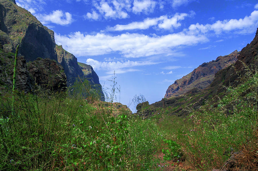 Wild grasses in the Masca Gorge by Sun Travels