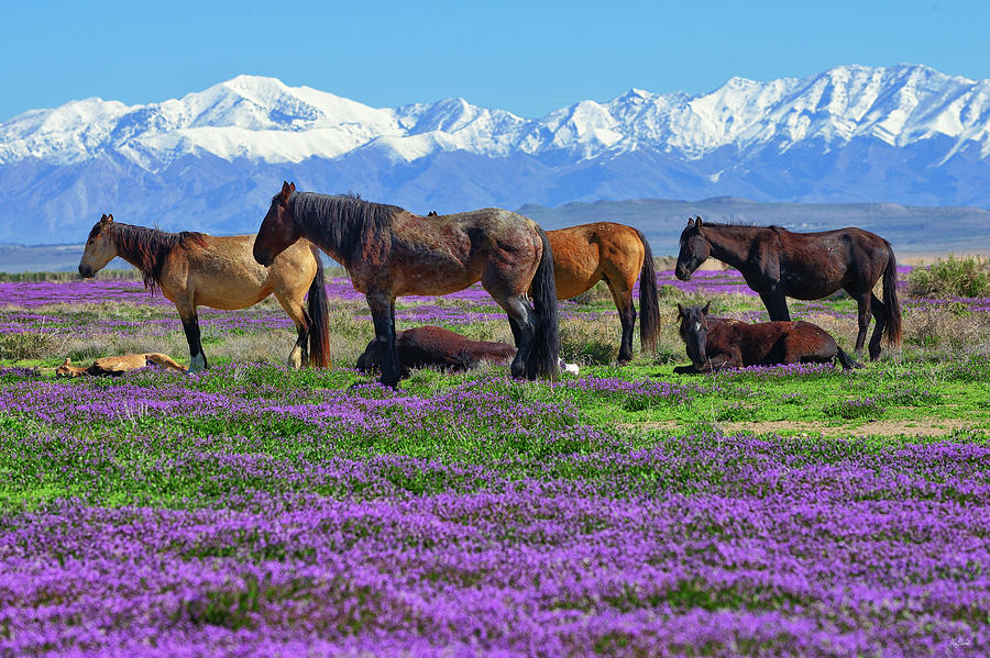 Wild Horses Photograph - Wild Horse Heaven by Greg Norrell
