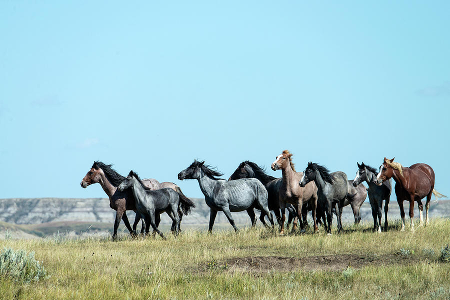 Wild Horse In Theodore Roosevelt Natl Photograph by Mark Newman