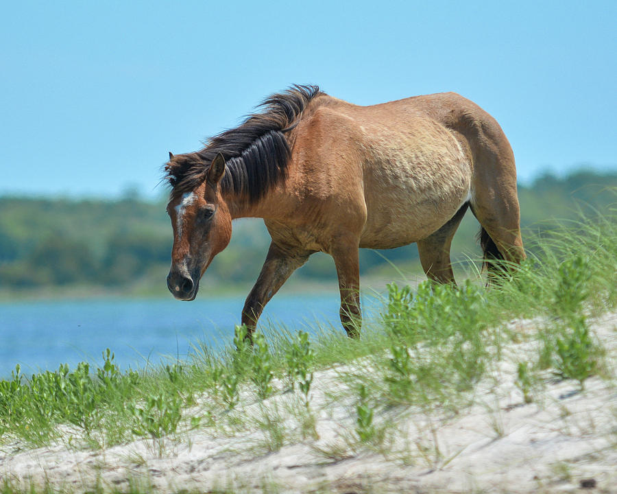 Wild Horse on the Beach by Dave Hilbert