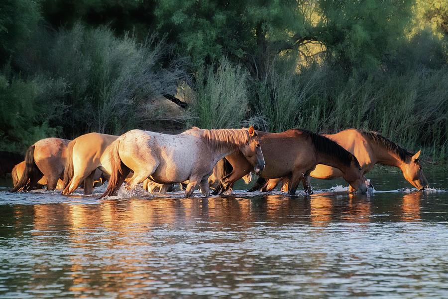 Wild Horse River Crossing  by Saija Lehtonen