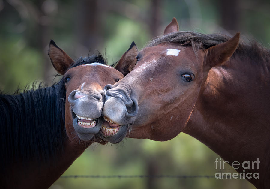 Wild Horse Smiles by Lisa Manifold