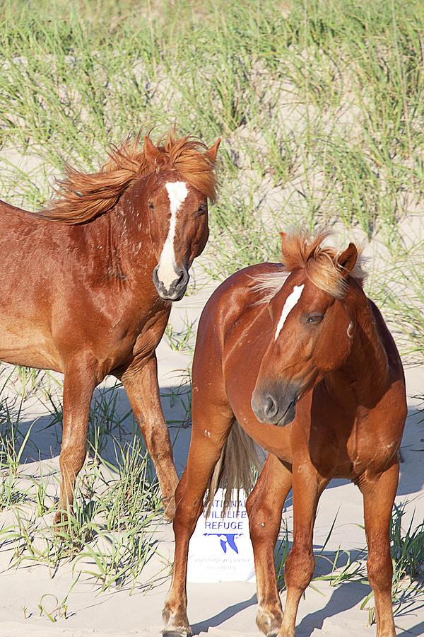 Wild Horses 117 by David Stasiak