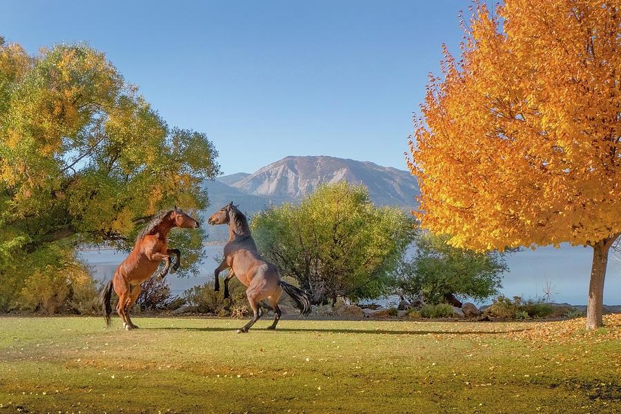 Wild Horses at Washoe Lake by Janis Knight