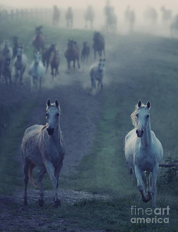 Equestrian Photograph - Wild Horses by Conrado
