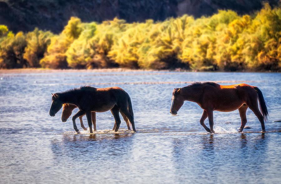 Wild Horses Crossing The River  by Saija Lehtonen