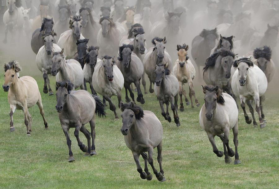 Horse Photograph - Wild Horses by Dieter Uhlig