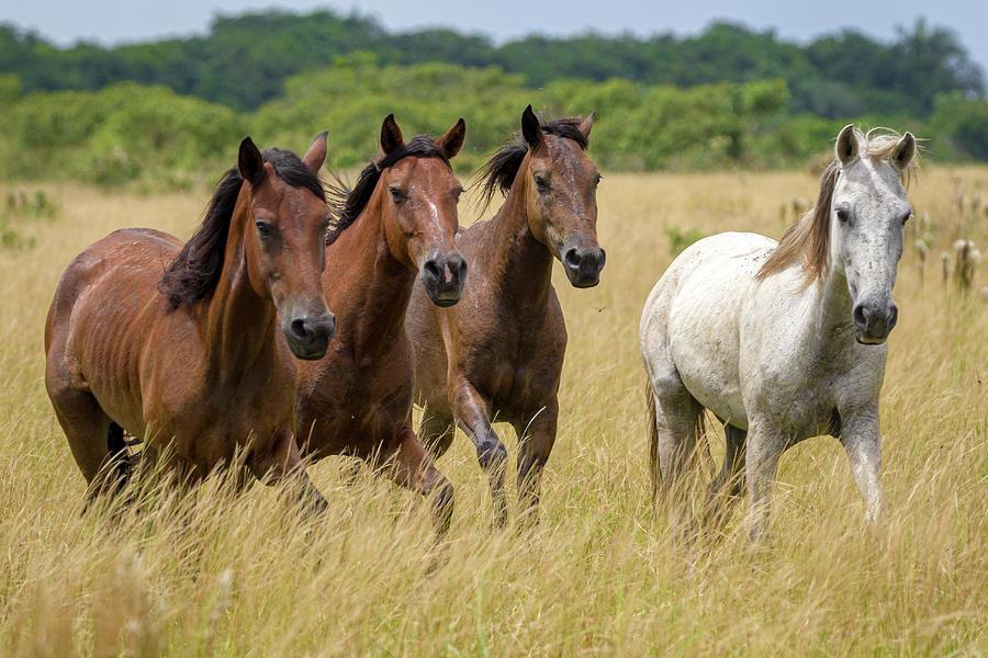 Wild Horses Hato Barley Tauramena Casanare Colombia by Adam Rainoff