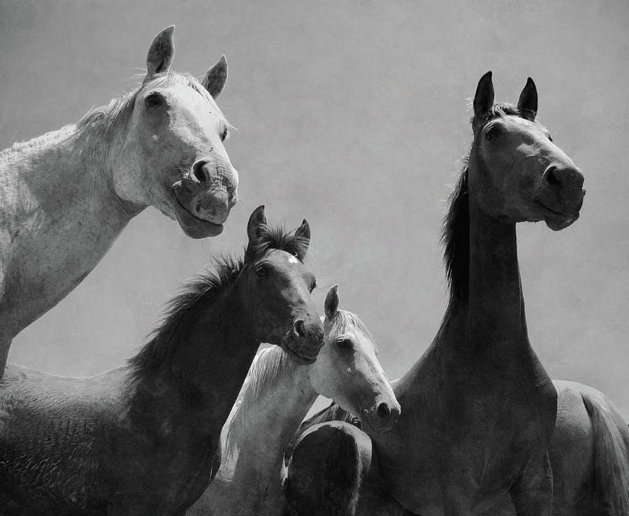 Wild Horses Portrait Photograph by Antonio Arcos Aka Fotonstudio Photography