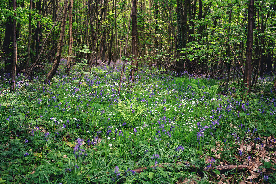 Wild Hyacinth Forest by Pati Photography