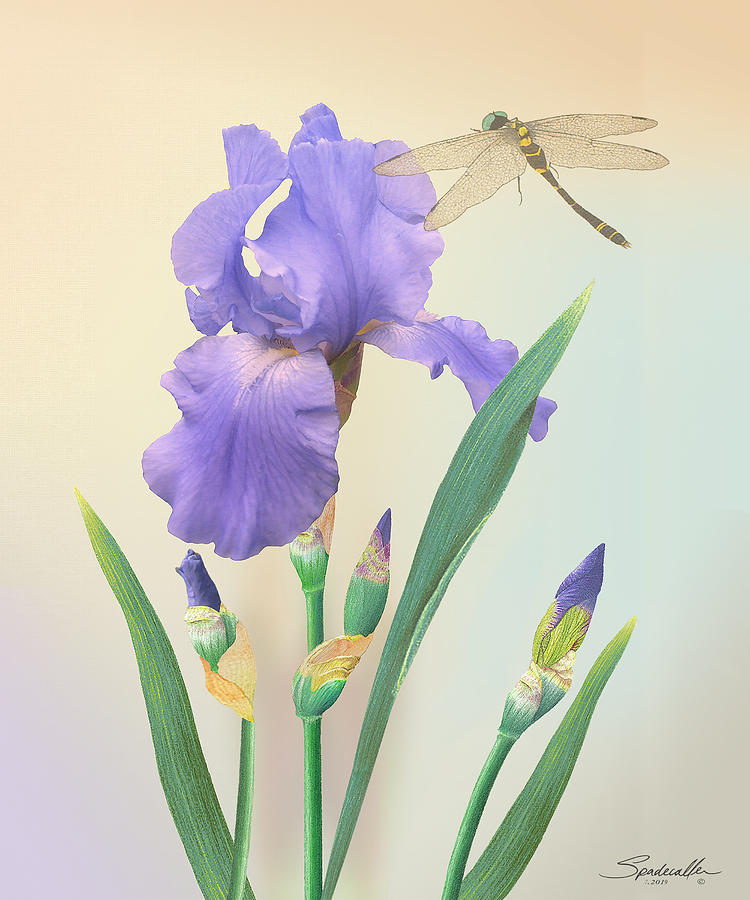 Wild Iris and Dragonfly by Spadecaller