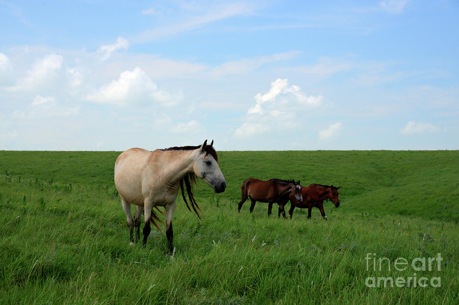Wild Mustang in Greenwood County by Jean Hutchison