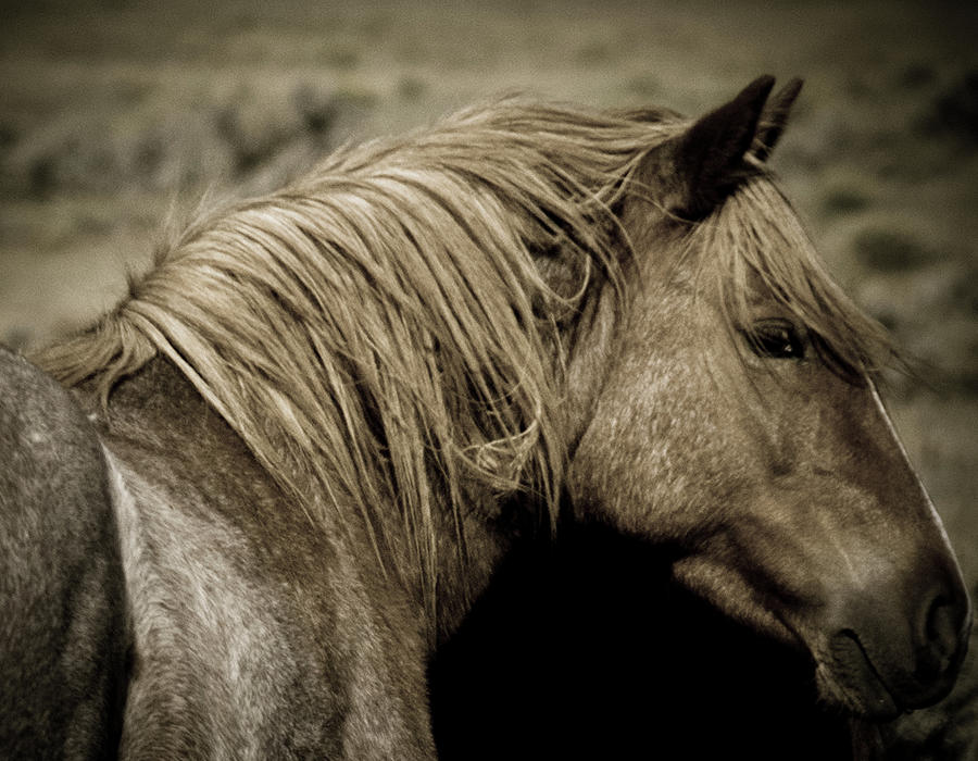 Wild Mustangs of New Mexico 13  by Catherine Sobredo