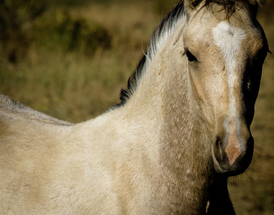 Wild Mustangs of New Mexico 5 by Catherine Sobredo